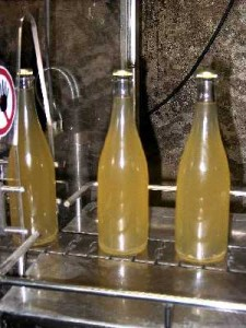 Filling of wine with yeast.